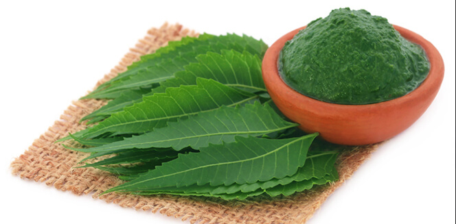 Neem Extract Market Finds Industry Acceptance for Its Medicinal Properties
