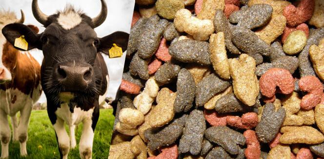 Medicated Feed: A Novel Way to Improve Health through Animal Feed ...